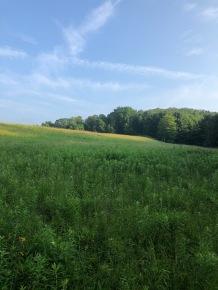 The north field