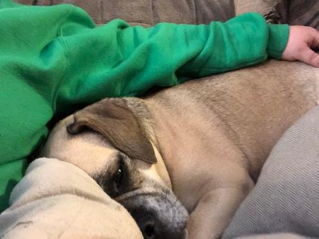 Merlin snuggling with Momma Joan