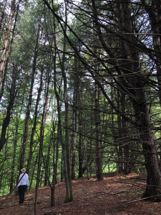 The Woods on Ed's mountain