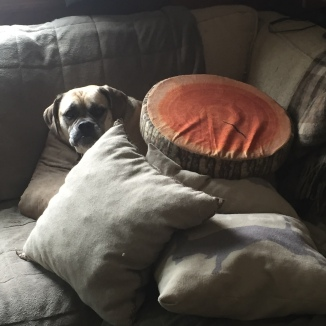 Merlin loves to dig beneath the pillows.