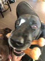I got a bone!
